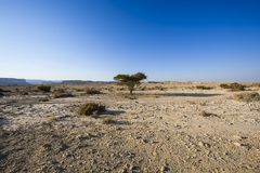 Nature of the Middle East. Rocky hills of the Negev Desert in Israel. Breathtaking landscape and nature of the Middle East royalty free stock images