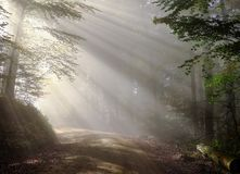 Nature, Mist, Forest, Tree Royalty Free Stock Photos