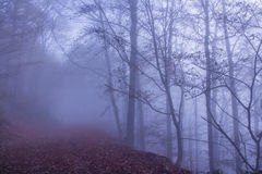 Nature Misty Forest Landscape. T europe Germany Stock Photography