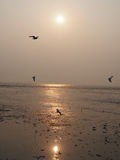 The nature moment of the sea and birds. The sun is reflecting the light, while the bird still enjoy flying randomly on the sky high Stock Image