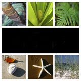 Nature montage Royalty Free Stock Photography