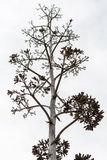 Nature morte, vieil arbre sec sur un fond blanc Images stock