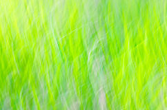 Nature motion blur green background Royalty Free Stock Images