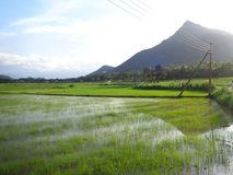 Nature and mountain fadifield in sri lanka stock images
