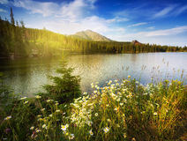 Nature mountain scene with camomiles and lake. In Slovakian Tatras - Strbske pleso Royalty Free Stock Photos