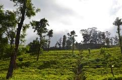 Nature and mountain Tea State in Srilanka stock photo