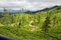 Nature and mountain Tea State in Srilanka royalty free stock photography