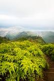 Nature mountain trail hike on Kuliouou Ridge in Ho Royalty Free Stock Image