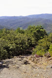 Nature in the mountains of the Cevennes Royalty Free Stock Photography