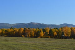 Nature mountains trees field grass. The beauty of the Russian land Royalty Free Stock Photo