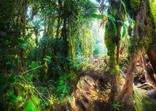 Nature moussue mystique de forêt d'imagination malaysia photo stock
