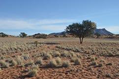 Nature of Namib Desert, Namibia, Africa Stock Images