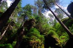 Nature National Park Czech Switzerland. Forest in National Park Czech Switzerland, Czech republic, Europe stock photo