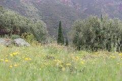 Nature/Natura. Natura fiori, verde green, boschi Royalty Free Stock Photos