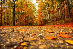 AUTMN The trees removes its beautiful autumn suit and awaits winter. Nature landscape colors beauty of nature autumn trees removes its beautiful suit awaits royalty free stock image