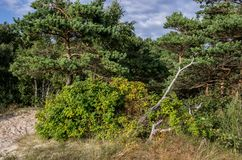 Nature near Baltic Sea in Lithuania Stock Image