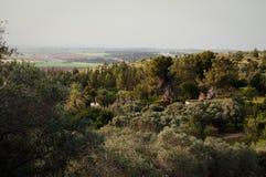 Nature near Jerusalem . Stock Photo