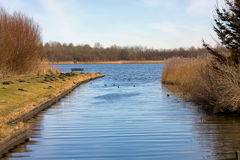 Nature in the Netherlands Stock Photography