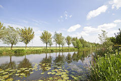 Nature in the Netherlands royalty free stock photography