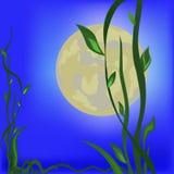 Nature nocturne. Photo libre de droits