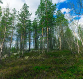 nature nordique Photographie stock libre de droits