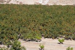 nature normale de montagnes d'horizontal d'Almeria Andalousie cabo de desert gata d'agave près d'Espagnol de centrale de stationn Images libres de droits