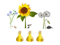Nature oils Royalty Free Stock Images