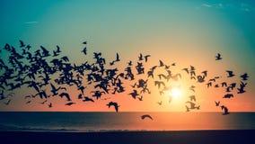 nature Oiseaux au-dessus de la mer pendant un coucher du soleil renversant Photos libres de droits