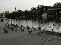 Nature, oiseaux, sur la Hongrie Photo stock