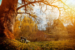 Nature in the old park at autumn. Royalty Free Stock Photos