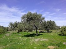 Nature. One spring day in Greece Stock Image