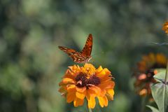Nature orange photo stock