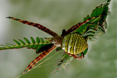 Nature orb web spider. A small spider in the middle of the parks stock images