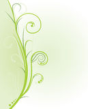 Nature ornament card. Green nature ornament card - vector Royalty Free Stock Photo