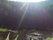 Nature& x27; pântano bonito de s no lado da montanha fotografia de stock