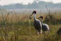 A nature painting and beautiful wall decor scenery which is pleasing to eyes created by sarus crane or Grus antigone. A nature painting and beautiful home decor royalty free stock photos