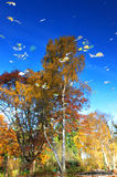 Nature painting of trees. Nature painting of abstract autumnal trees reflection on pond surface Royalty Free Stock Photos