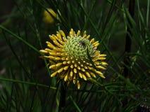Nature& x27; palillos de s fotografía de archivo libre de regalías