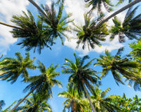 Palm trees against blue sky Royalty Free Stock Photo