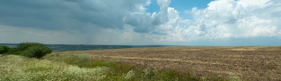 Nature panoramic landscape. Some wild flowers and green bush are growing on the edge of empty agricultural field. Blue. Sky covered with big white cumulus stock photo
