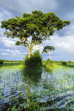 The Nature in Pantanal, Brazil Stock Photography