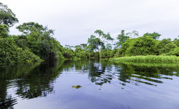 The Nature in Pantanal, Brazil.  royalty free stock image
