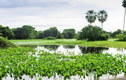 The Nature in Pantanal, Brazil Stock Image