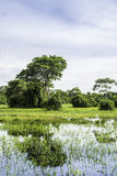 The Nature in Pantanal, Brazil.  royalty free stock photo