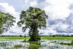 The Nature in Pantanal, Brazil Stock Photo