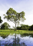 The Nature in Pantanal, Brazil.  stock photography