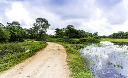 The Nature in Pantanal, Brazil.  stock images