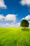 Nature paradise Stock Images