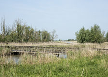 The nature park the oostvaardersplassen in holland Stock Image