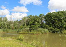 Nature Park Pond Stock Image